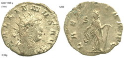 gallienus laetitia avg19.jpg